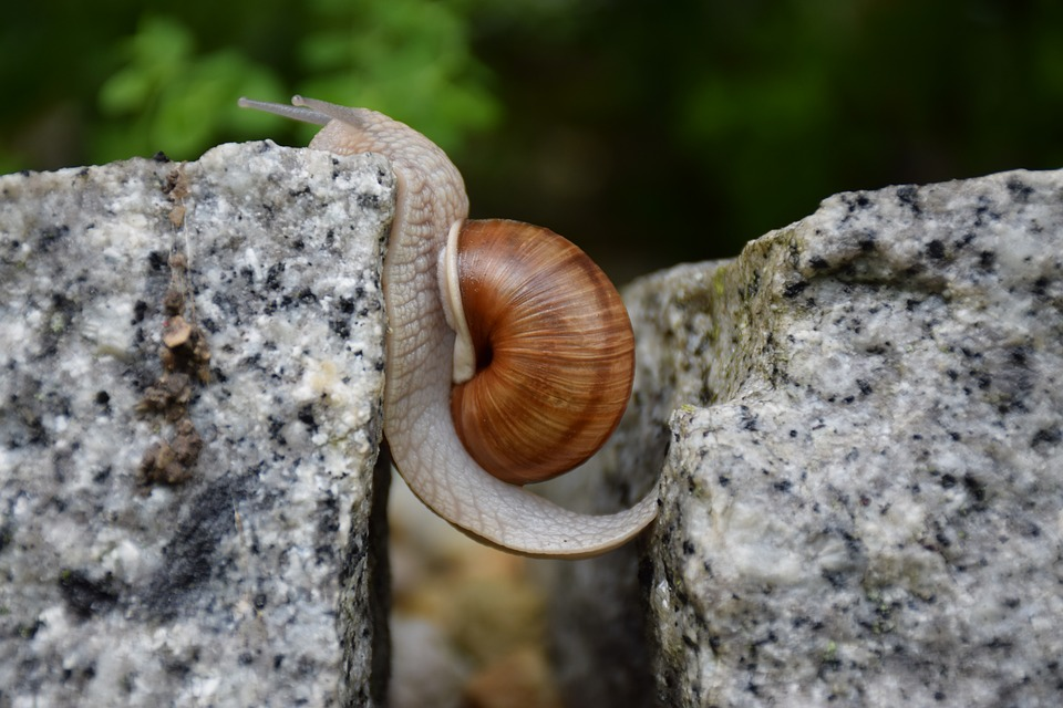 snail showing grit